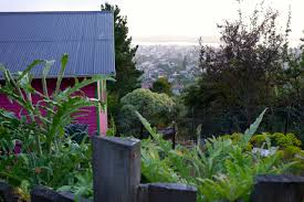 visiting a hillside backyard permaculture in hobart milkwood