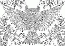 free owl coloring pages print coloring