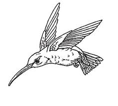 get this hummingbird coloring pages free printable 80226