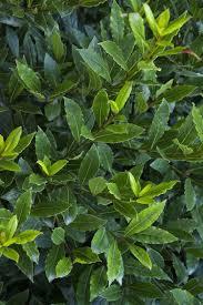 les herbes aromatiques en cuisine herbes aromatiques en cuisine