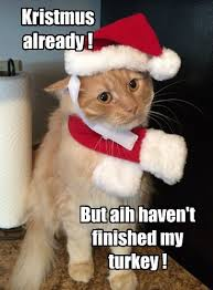 Funny Holiday Memes - lolcats holiday lol at funny cat memes funny cat pictures with