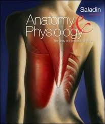 Human Physiology And Anatomy Pdf Saladin Anatomy And Physiology 6th Edition Pdf Stuvera Com