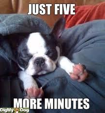 Hyper Dog Meme - buddies gallery giggles galore baxterboo
