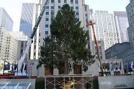 christmas tree arrives at rockefeller center new york post