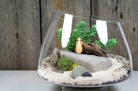 home decoration lovely terrarium plants with decorative white