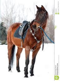 Horse Saddle by Horse With A Saddle Stock Image Image 29935351