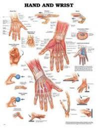 tattoo pain chart wrist hand tattoo pain chart danesharacmc com