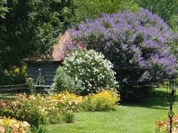 garden ornamental trees landscaping with ornamental trees gallery