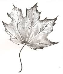 maple leaf tattoo meaning maple leaf by raura fall decor pinterest sketches charcoal