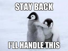Meme Penguin - funny penguin memes 20 pics bajiroo com
