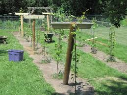 100 diy trellis plans best 20 bamboo trellis ideas on