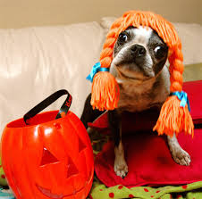 Dogs Halloween Costumes Pictures Win Free Halloween Costume Dog Dog Guide
