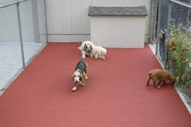 amazing of best flooring with dogs best flooring for kennels