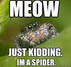 Funny Spider Meme - don t kill spiders spiders freaky things