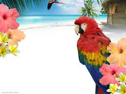 free background images and wallpaper wallpapersafari