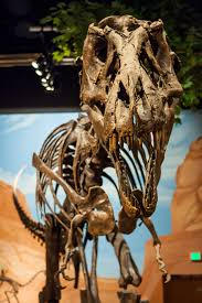 the 25 best dinosaur museum utah ideas on utah