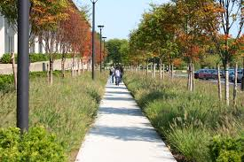 suny albany angular planting beds come together bosque of trees