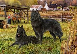 belgian sheepdog art shop for cards belgian sheepdog