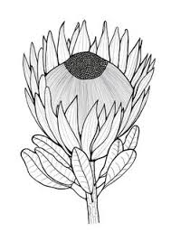 protea flower coloring color happy protea