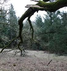 tree swing inspection internachi