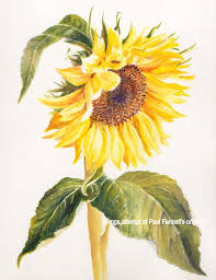 9 best yin yang images on pinterest nature sunflower drawing