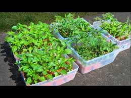 how to grow a garden from seed soil prep starting tomato seeds