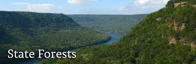 Tennessee Forest images State forests tennessee division of forestry jpg
