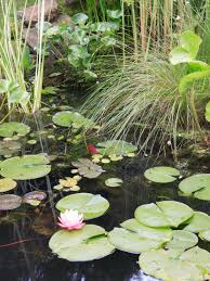 how to create a wildlife pond hgtv