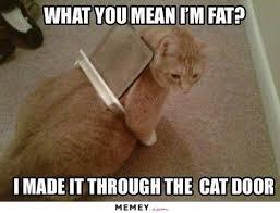diet memes funny diet pictures memey com