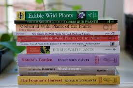 plants native to kansas winter reading foraging wild plants u2013 soil collective