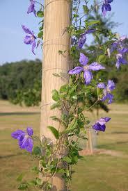 4m climbing plant pole 65 99