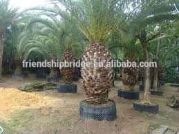 wholesale outdoor ornamental decrotive landscaping
