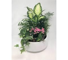 flower delivery washington dc dc flower delivery washington florist gifts plants