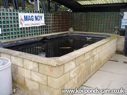 koi pond selection