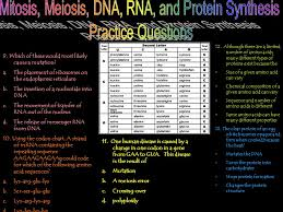 dna rna and protein synthesis skills worksheet answers the best