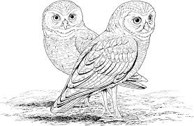 Owl Mandala Coloring Pages Coloring Pages Owl Color Pages