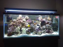 55 gallon aquarium light need 55 gallon reef setup saltwater pinterest 55 gallon