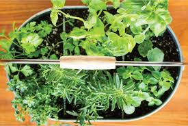 simple tips for growing herbs in pots for beginners quick guide
