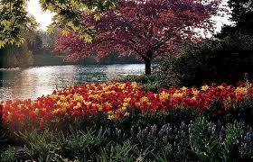 Botanic Garden Glencoe Chicago Botanic Garden Places Of Interest In 1000 Lake Cook Road