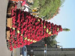 poinsettia tree poinsettia tree magical mystical