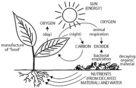 Photosynthesis Coloring Worksheet Free Worksheets Library Photosynthesis Coloring Page