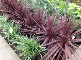 bamboo land nursery and parklands 142 best ornamental grasses images on pinterest landscaping