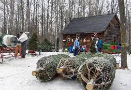 family fun at christmas tree farms toronto4kids december 2012