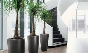 plantes bureau plantes de bureau florastore