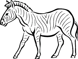 zebra coloring pages for preschoolers to colour in coloring