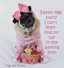 Birthday Pug Meme - pretty 30 pug birthday meme wallpaper site wallpaper site