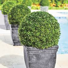 Topiary Balls With Flowers - boxwood ball artificial topiary