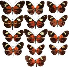evolutionary novelty in a butterfly wing pattern through enhancer