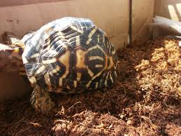 possible issues with coco peat miscellaneous queries tortoise