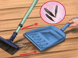 how to clip quail wings 10 steps with pictures wikihow